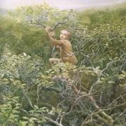 Bilbo subido a un árbol