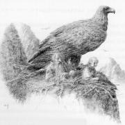 Águila en el nido