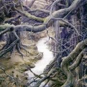 El Bosque de Fangorn
