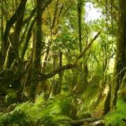 Localización del Bosque de los Trolls4
