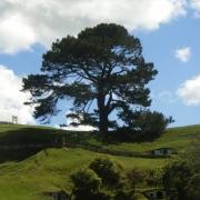 Árbol sobre la colina
