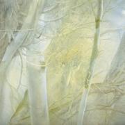 Bárbol oculto entre ramas