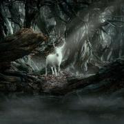 El Ciervo Blanco