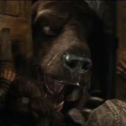 Un oso o un wargo3