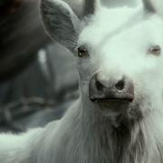 Primer plano del ciervo blanco