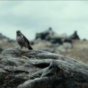 El zorzal en la Desolación de Smaug